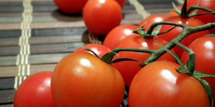 tasty red tomatoes