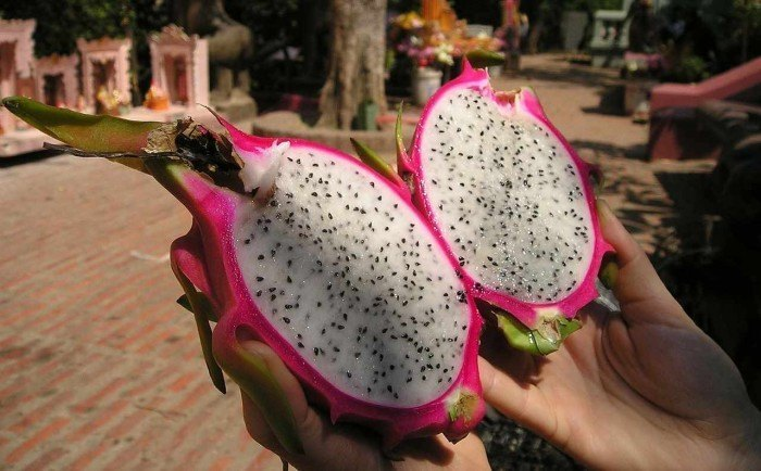 dragon fruit in hand