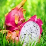 7 Stunning Health Benefits Of Dragon Fruit